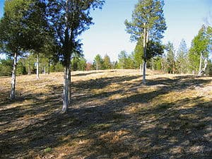 Battle of Musgrove Mill